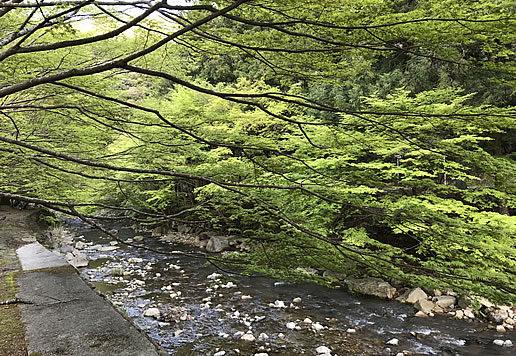大寧寺の新緑
