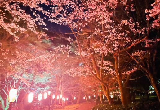 大寧寺夜のライトアップ